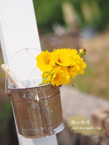 少し可哀想な花