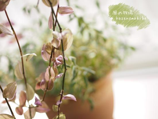 部屋を飾る植物