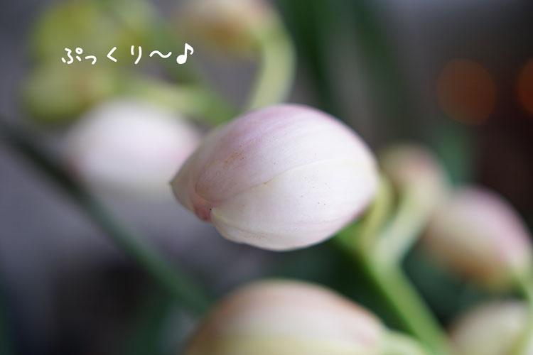 DSC04597_0011.jpg