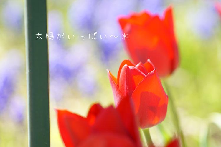 DSC06068_1256.jpg