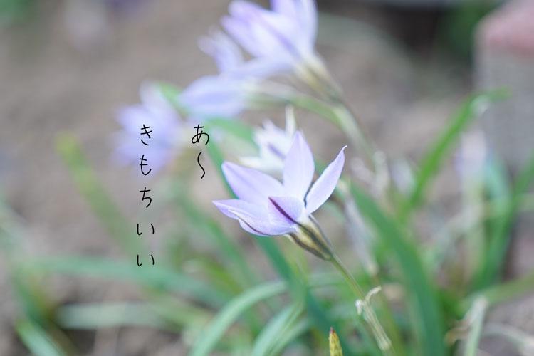 DSC06111_1292.jpg