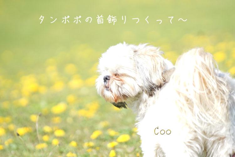 DSC06123_1300.jpg