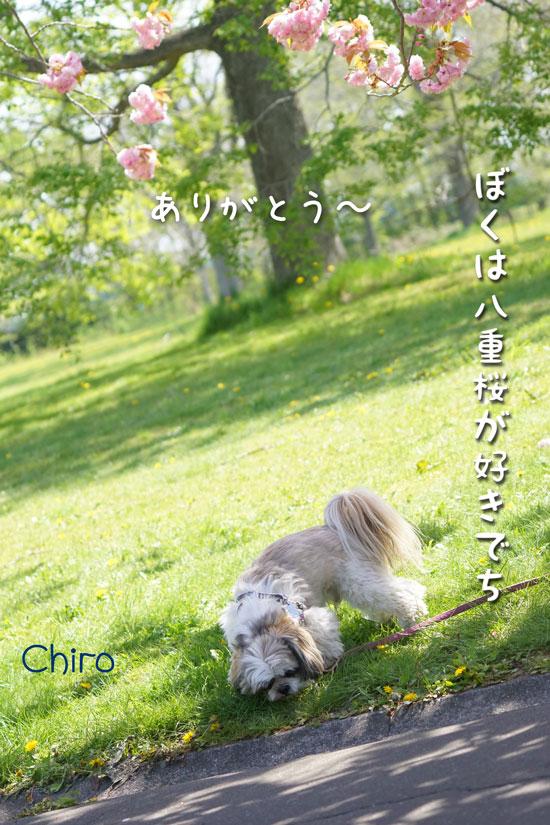 DSC06129_1304.jpg