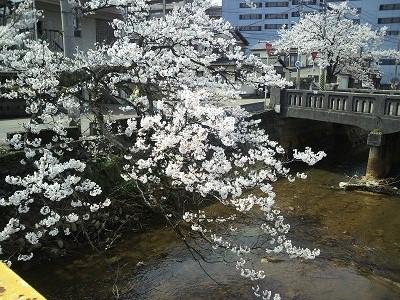 20150414 412福島江桜3