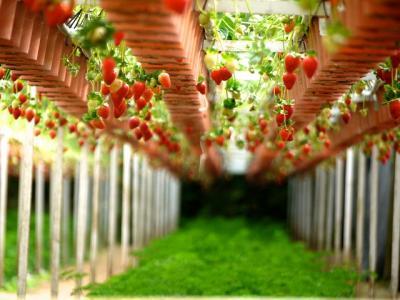 strawberry-260687_640_convert_20150209013224.jpg