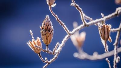winter-598631_640_convert_20150211003857.jpg