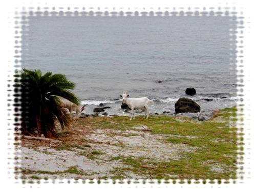 久々の無人島①