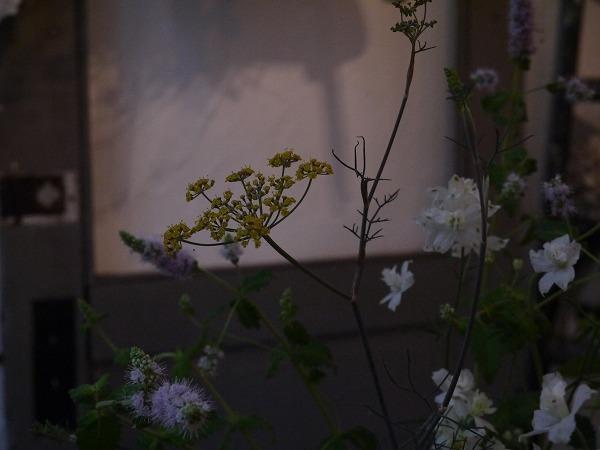フェンネルのお花