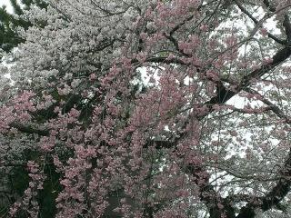 070咲き乱れ