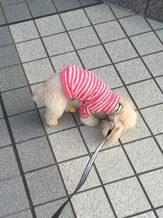 愛犬858