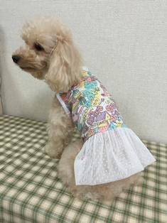 犬服906
