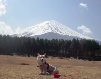 富士山 8