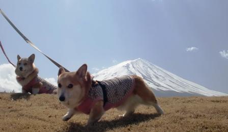 富士山 15