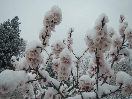 雪景色 (1)