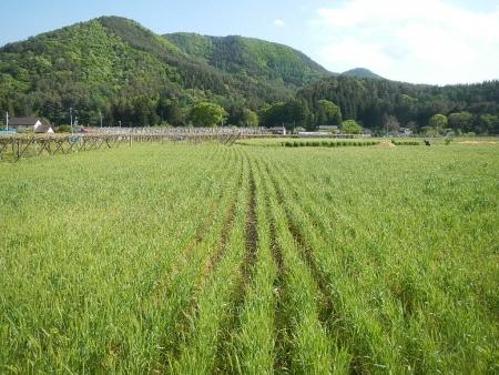 麦から大豆へ (3)