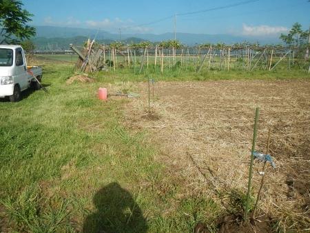 果樹定植作業 (5)