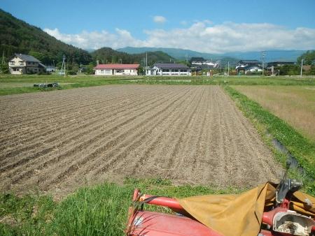 田んぼの大豆 (1)