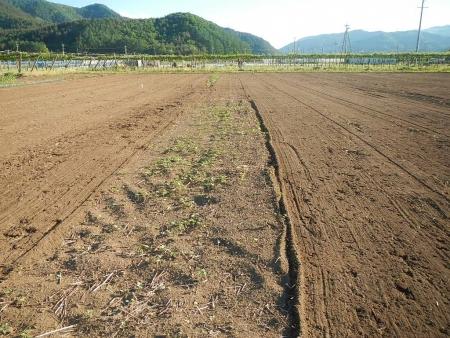 桔梗農場耕起作業 (4)