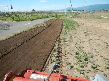 桔梗農場耕起作業 (2)