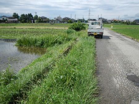 畦の草刈り作業 (1)