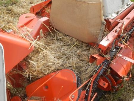 大麦の刈り取り (2)