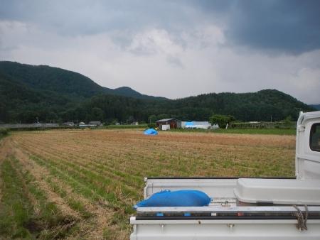 ハナマンテン小麦 (11)