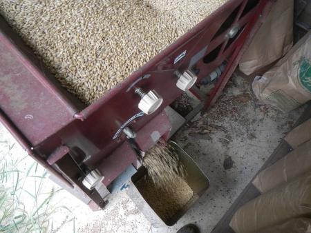 大麦作業 (4)