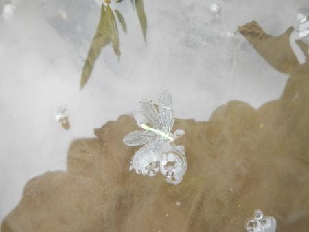 田んぼの蝶 (3)