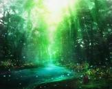 トサカ紀行4_目覚めの森