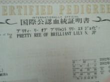 $やわらかい風-2011062413150000.jpg