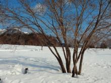 やわらかい風-2012012211030001.jpg