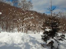 やわらかい風-2012021211260000.jpg