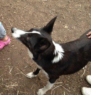 20150512 帯広市 ボーヤ・ファーム 牧羊犬