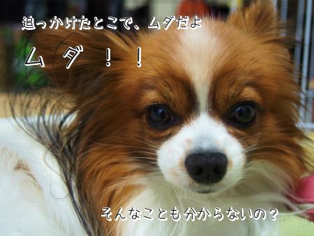 しおん箱4