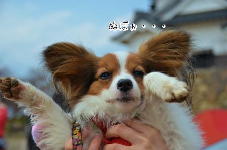 梅かふぇ1