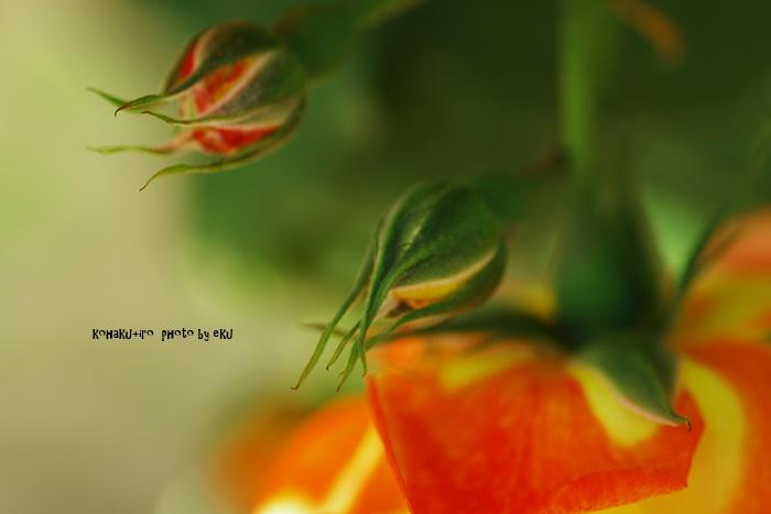 orange511.jpg