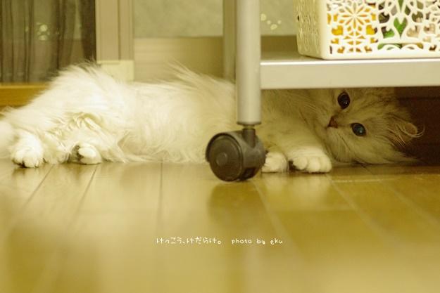 hanbun2.jpg