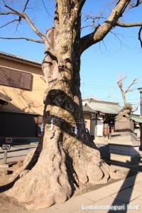 八幡神社(府中市是政)16