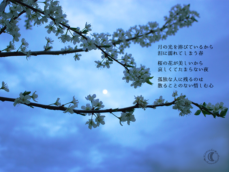 the moon and cherry blossoms