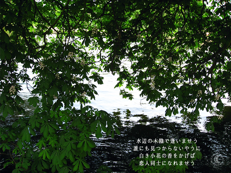 the shade of trees near the water