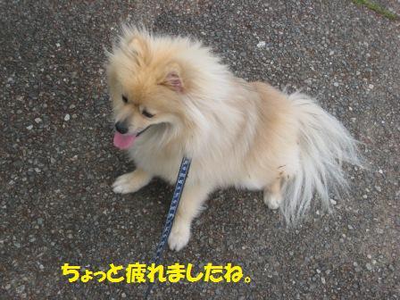 20150511_7.jpg