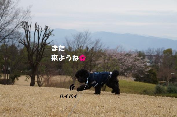 20150329-68