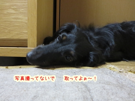 IMG_270709_4.jpg
