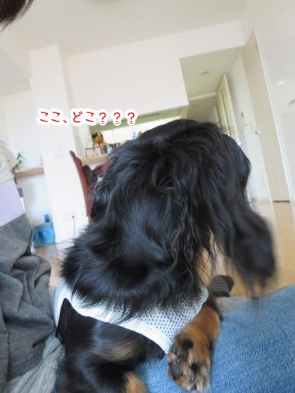 IMG_270727_3.jpg