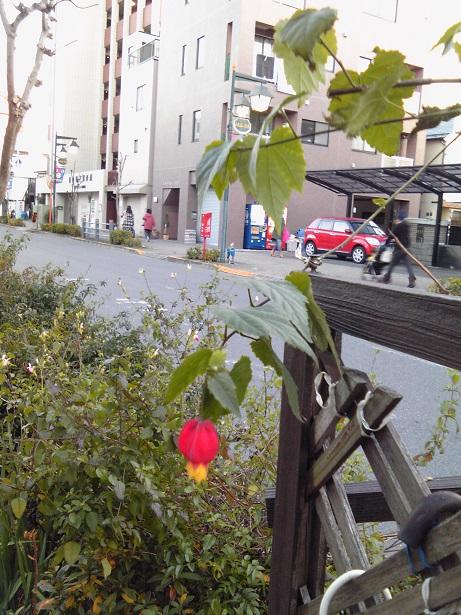 高円寺植栽2015_01#2