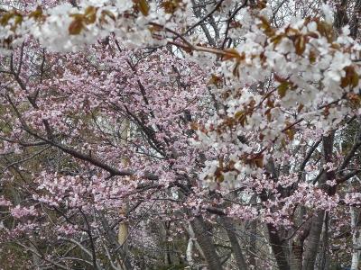 連休の川湯温泉と花