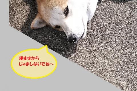 NCM_2265②