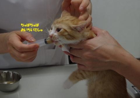 IMGP6695②