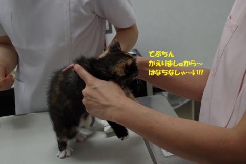 IMGP6715②