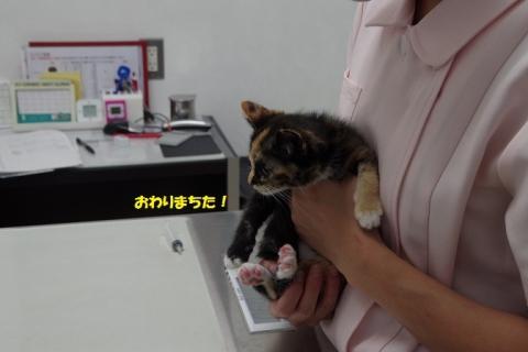 IMGP6718②